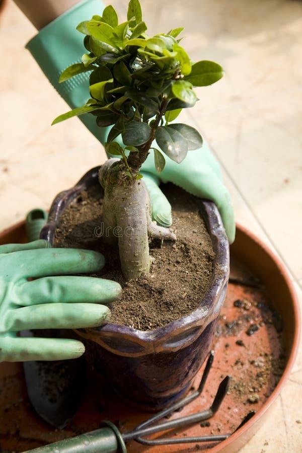 lägga in för växt arkivfoton
