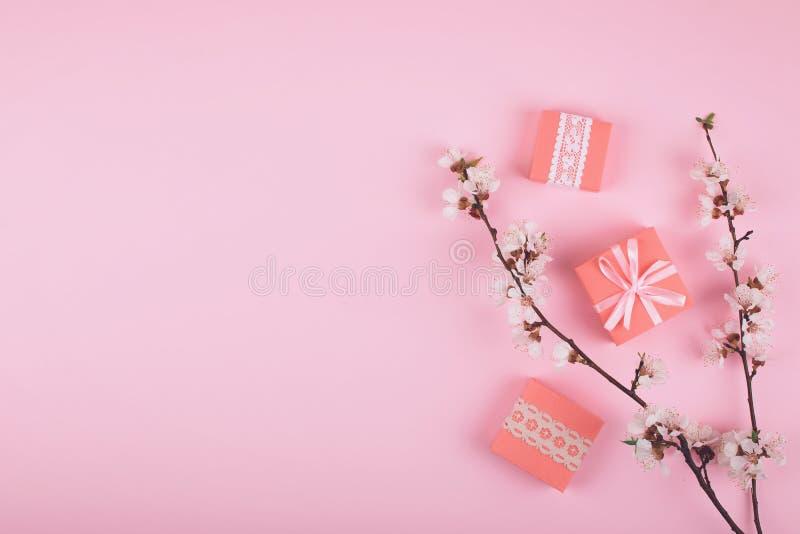 Lägga framlänges med rosa gåvaaskar och att blomma körsbärsröda sakura blommor på pastellfärgad bakgrund Bakgrund för flicka för  arkivfoton