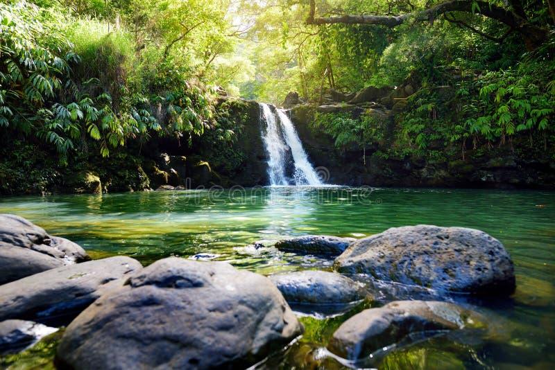 Lägre Waikamoi för tropisk vattenfall nedgångar och ett litet kristallklart damm, inom av en tät tropisk rainforest, av vägen til royaltyfria bilder