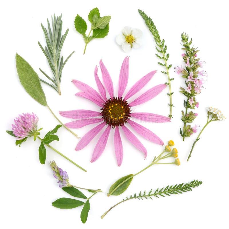 läka örtar Medicinalväxt- och blommabukett av echinaceaen, växt av släktet Trifolium, yarrow, hyssop, vis man, alfalfa, lavendel, arkivbilder