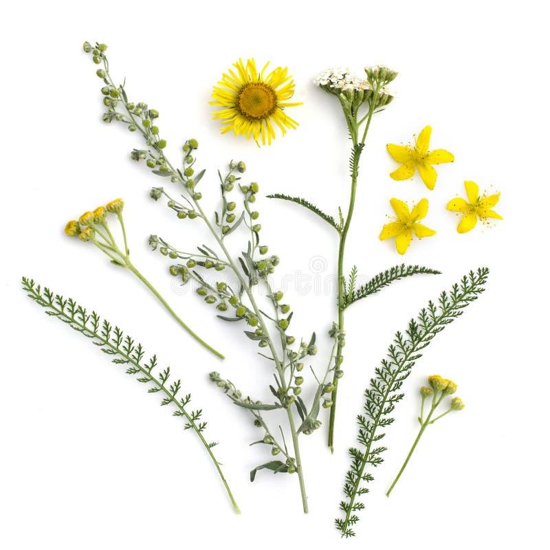 läka örtar Medicinalväxt- och blommabukett av malört, elecampane, yarrow, tansy, Sts John wort arkivbilder