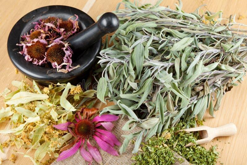 Läka örtar på den trätabellen, mortel och pestlen royaltyfri bild