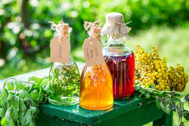 Läka örter i flaskor som hemlagad bot i trädgård arkivbilder