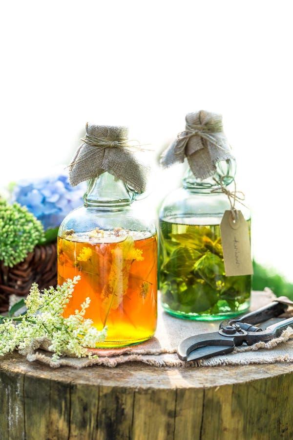 Läka örter i flaskor som naturlig medicin i trädgård royaltyfria foton