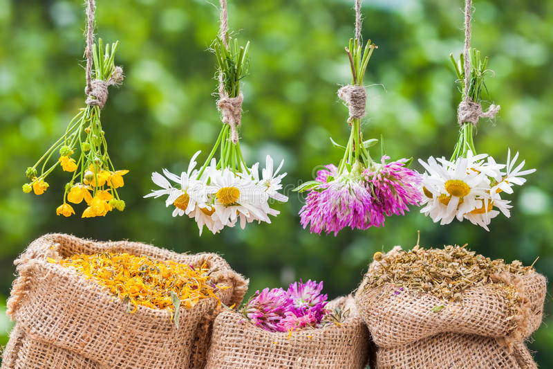 Läka örtgrupper och hessianspåsar med torkade växter arkivbild