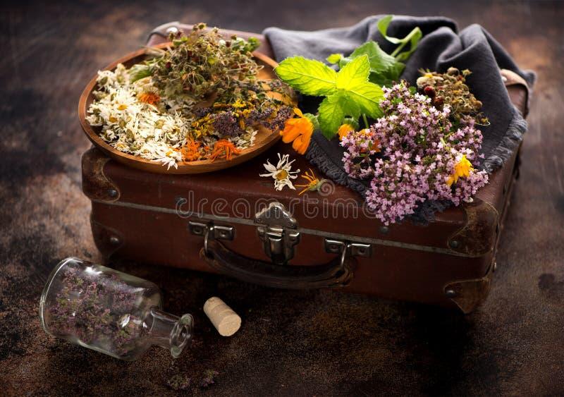Läka medicinska örter och blommor royaltyfria foton