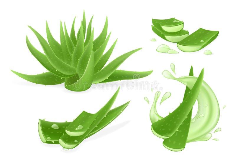 Läkemedelsväxter lämnar hela och styckade bitar med saftdroppar royaltyfri illustrationer