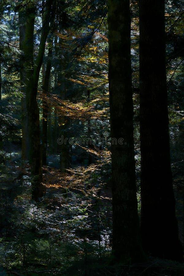 Lämnar banagranbokträdet royaltyfri fotografi