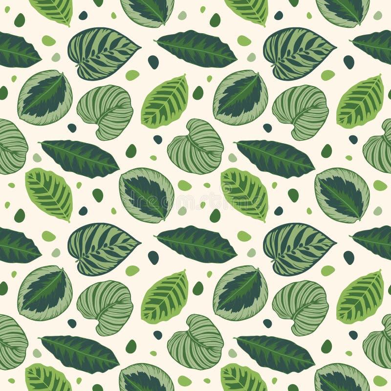 Lämnar den sömlösa grafiska illustrationmodellen för det tropiska bladet med den gröna Calathea bönväxten på vit bakgrund vektor illustrationer