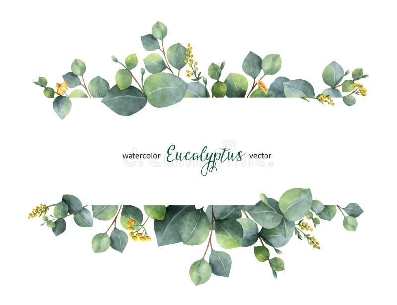 Lämnar det blom- banret för vattenfärgvektorgräsplan med silverdollareukalyptuns och filialer som isoleras på vit bakgrund arkivbild