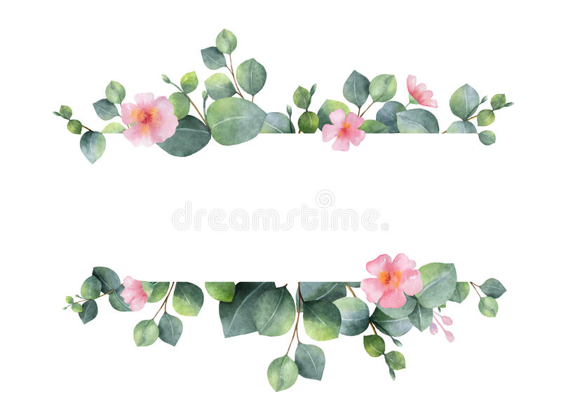 Lämnar det gröna blom- banret för vattenfärgen med silverdollareukalyptuns och filialer som isoleras på vit bakgrund royaltyfri foto