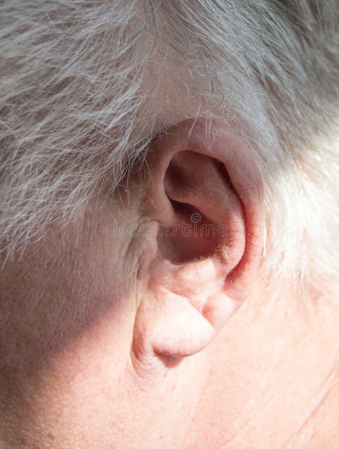 Lämnat öra av en gråhårig äldre man med utfrågningförlust, utfrågningproblem, begreppet av rehabilitering av gammalt dövt folk royaltyfria foton