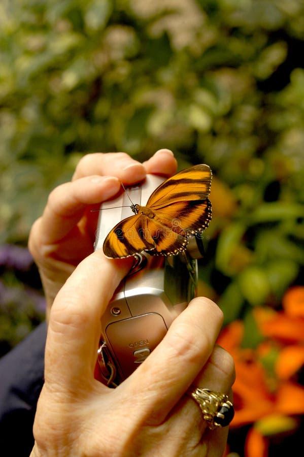 Länder eines viel sagende Schmetterlinges auf der Personenkamera, die versucht, ein Foto von ihm zu machen stockbilder