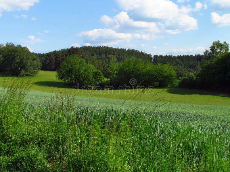 Ländliche hügelige Landschaft des Sommers mit Smaragdgrünwiese, -versuchen und -wolken im Himmel stockbild