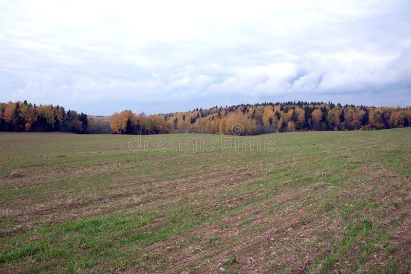 Ländliche Herbstlandschaft mit einem Feld und einem Wald am bewölkten Tag stockfoto