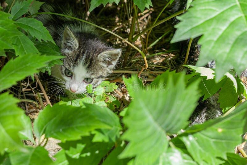 Ländliche Katze in den grünen Blättern stockfotografie