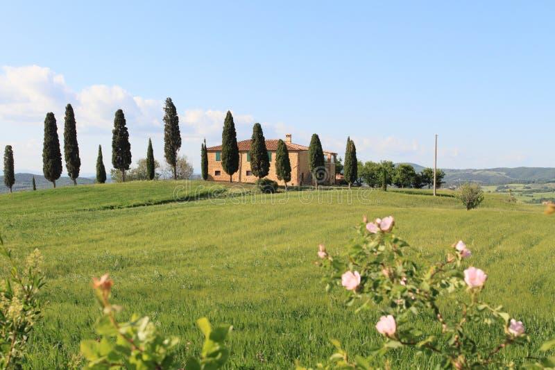 Ländliche Landschaft bei Pienza lizenzfreie stockbilder