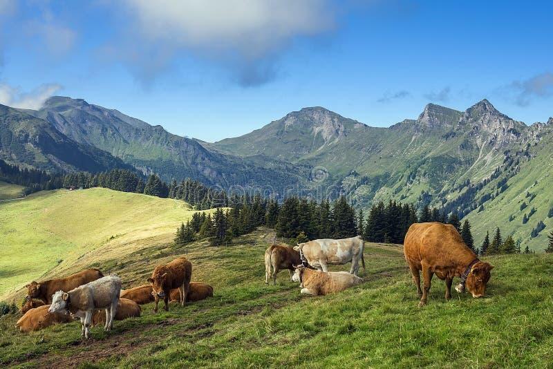 Ländliche Landschaft in den Schweizer Alpen stockfotografie