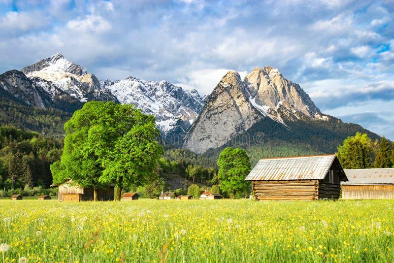 Ländliche Landschaft des alpinen Morgens mit blühendem Talmet des Frühlinges stockfoto