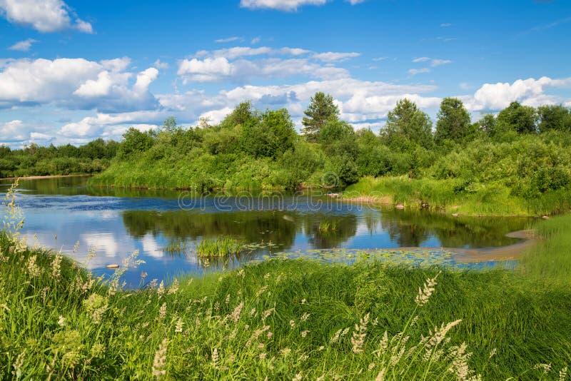 Ländliche Landschaft des schönen Sommers mit einem Fluss stockfotografie