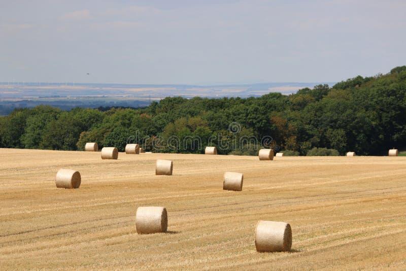 L?ndliche Landschaft des Sommers mit dem Ernten des Feldes, hayrolls, blauer Himmel, B?ume am Horizont sonniger Morgen stockfotografie