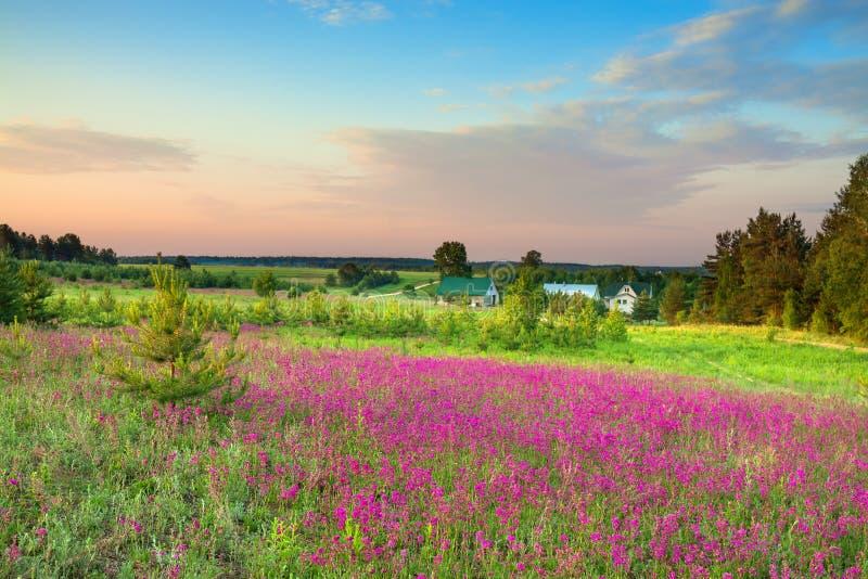 Ländliche Landschaft des Sommers mit einer blühenden Wiese und einem Bauernhof lizenzfreie stockfotografie