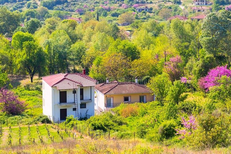 Ländliche Landschaft in Griechenland mit Bauernhof und Weinbergen lizenzfreies stockfoto