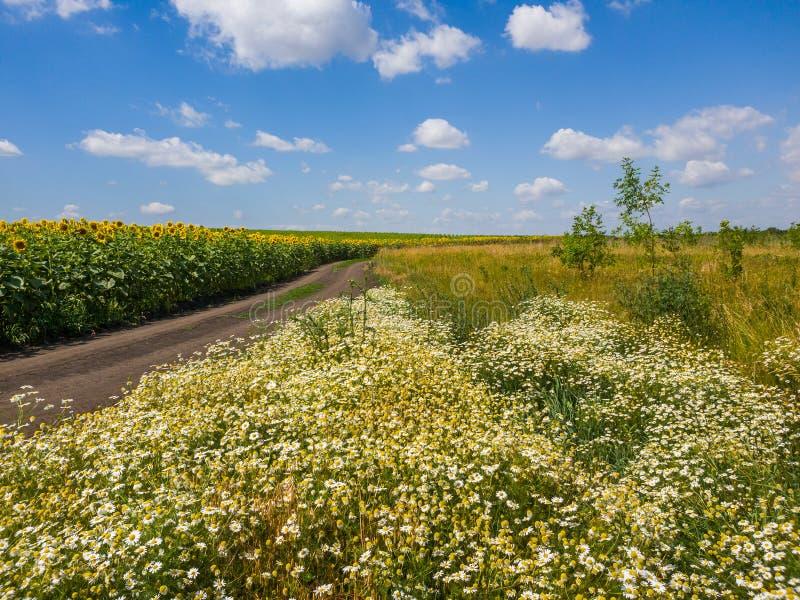 Ländliche Landschaft mit Blumen Straße und Feld mit Sonnenblume, Russland stockbild