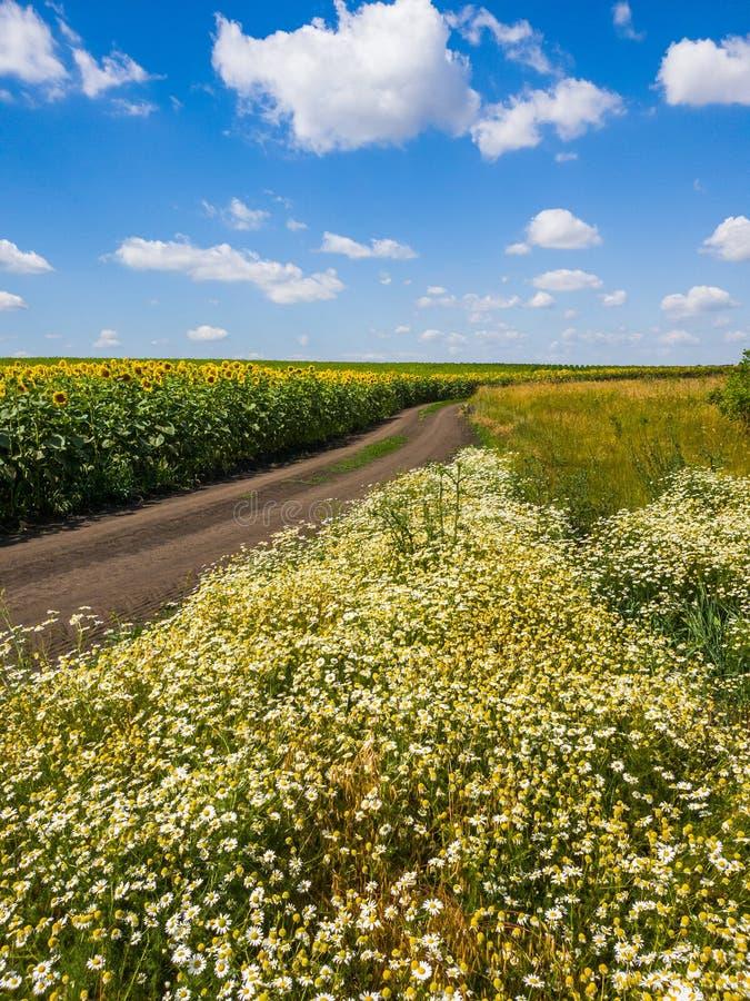 Ländliche Landschaft mit Blumen, Straße und Feld mit Sonnenblume, Russland stockfoto