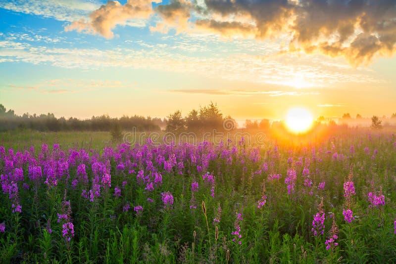 Ländliche Landschaft mit dem Sonnenaufgang, einer blühenden Wiese und Nebel lizenzfreies stockfoto