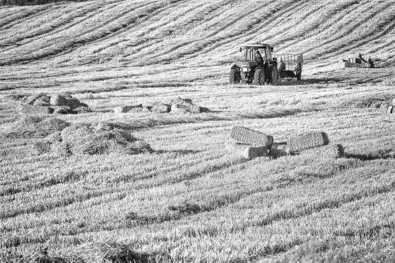 Ländliche Landschaft mit dem Traktor, der Heu sammelt stockbilder