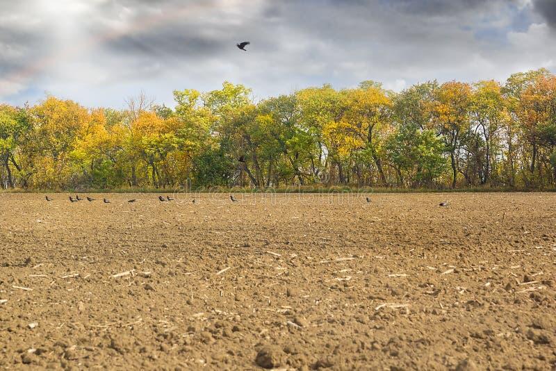 Ländliche Landschaft mit einem gepflogenen Feld- und Herbstwaldland lizenzfreies stockbild