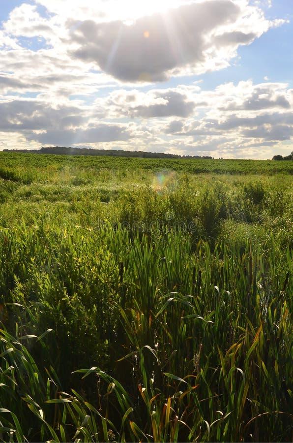 Ländliche Landschaft mit einem grünen Feld unter einem bewölkten Blau SK lizenzfreies stockfoto