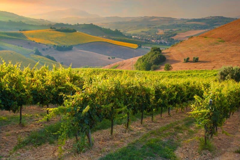 Ländliche Landschaft mit einem grünen Weinberg unter Hügeln stockbild