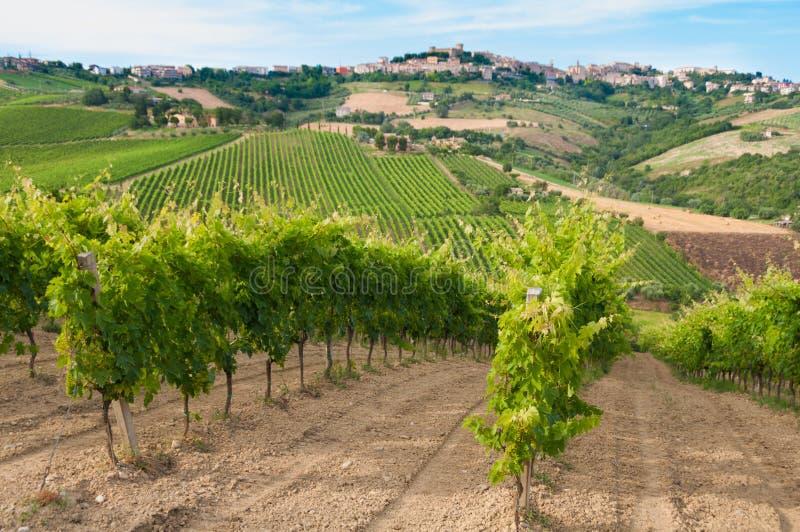 Ländliche Landschaft mit einem grünen Weinberg unter Hügeln lizenzfreies stockbild
