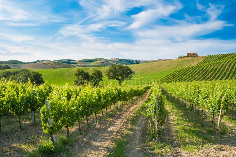 Ländliche Landschaft mit einem grünen Weinberg unter Hügeln lizenzfreie stockfotos