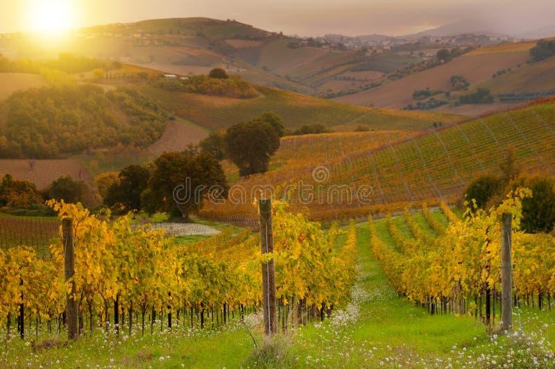 Ländliche Landschaft mit einem grünen Weinberg unter Hügeln stockbilder