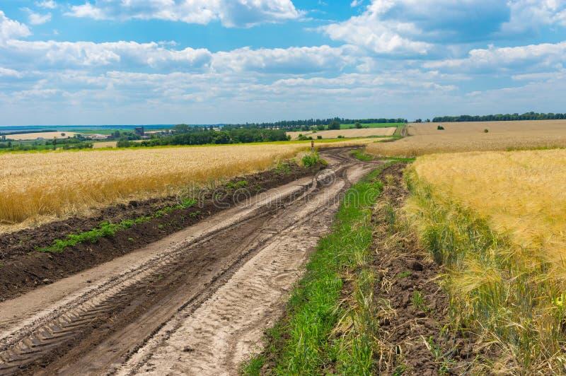 Ländliche Landschaft mit Erdweg unter Weizenfeldern an der Sommersaison lizenzfreie stockfotografie