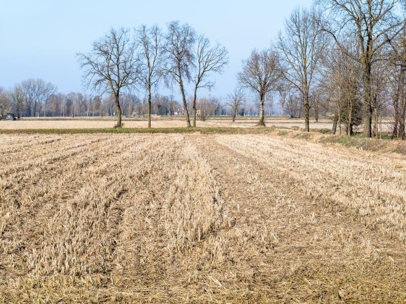 ländliche Landschaft mit geerntetem fileld in Lombardei lizenzfreies stockbild