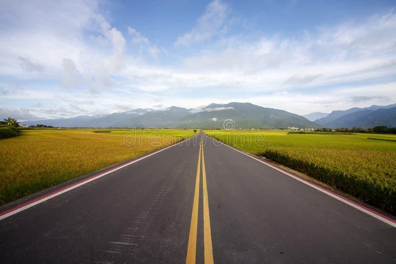 Ländliche Landschaft mit goldenem Bauernhof des ungeschälten Reises bei Luye, Taitung, Taiwan lizenzfreies stockbild