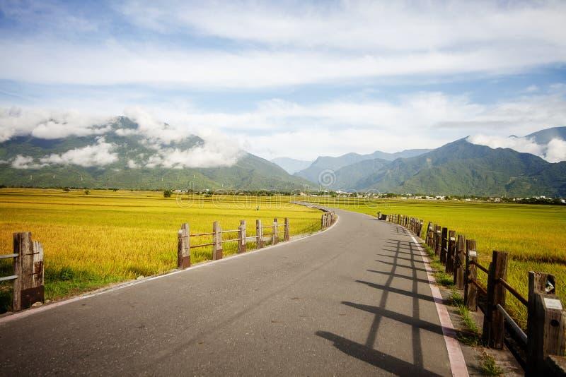 Ländliche Landschaft mit goldenem Bauernhof des ungeschälten Reises bei Luye, Taitung, Taiwan lizenzfreie stockfotos