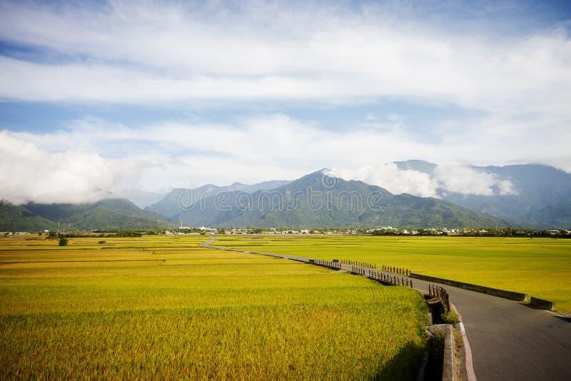 Ländliche Landschaft mit goldenem Bauernhof des ungeschälten Reises bei Luye, Taitung, Taiwan stockbild