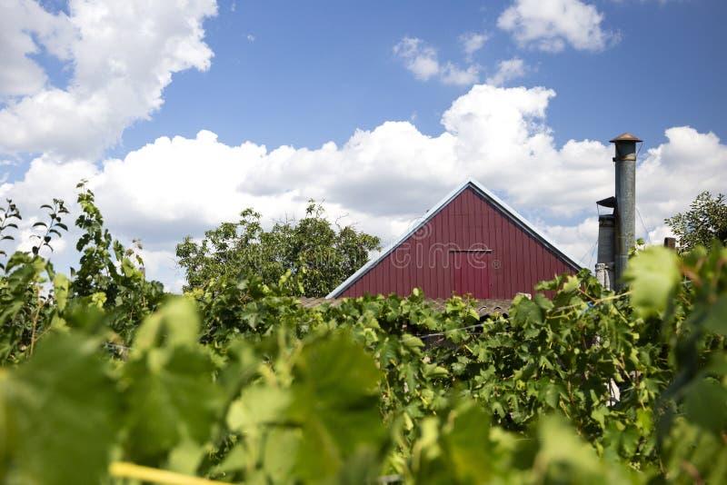 Ländliche Landschaft mit Weinberg und rotem Dachhaus lizenzfreies stockbild