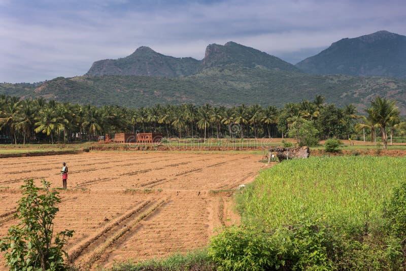 Ländliche Landschaft nahe Karattupatti im Tamil Nadu lizenzfreies stockbild