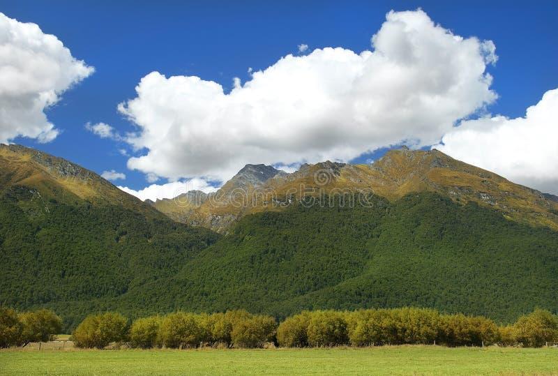 Ländliche Landschaft in Neuseeland stockbild