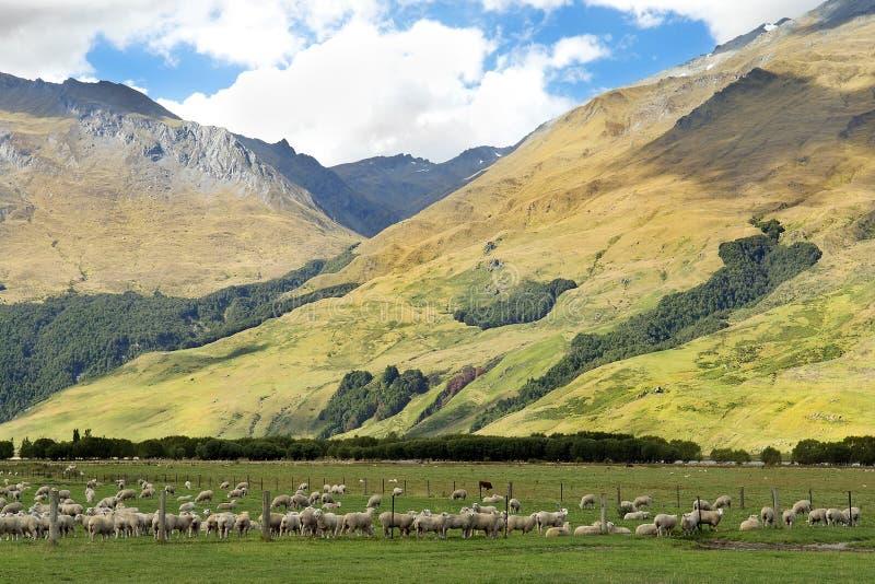 Ländliche Landschaft in Neuseeland lizenzfreies stockbild