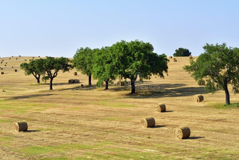Ländliche Landschaft, Portugal lizenzfreies stockbild
