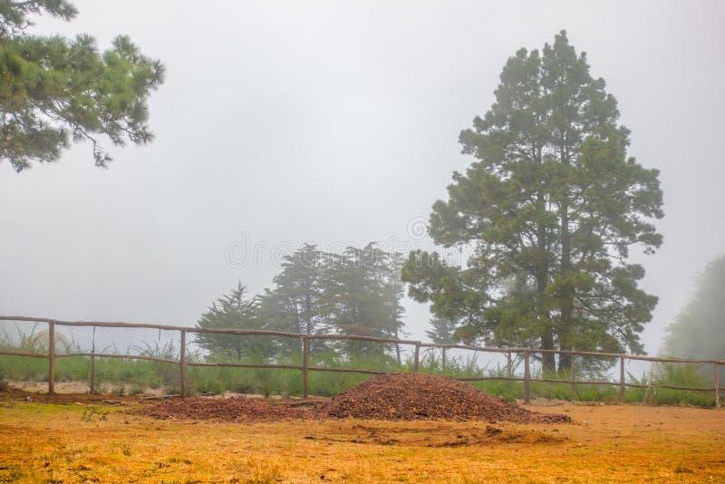 Ländliche Landschaftsfester Nebel stockfotografie