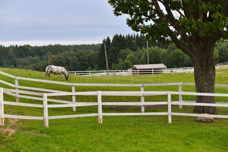 Ländliche Pferderanchlandschaft lizenzfreie stockbilder