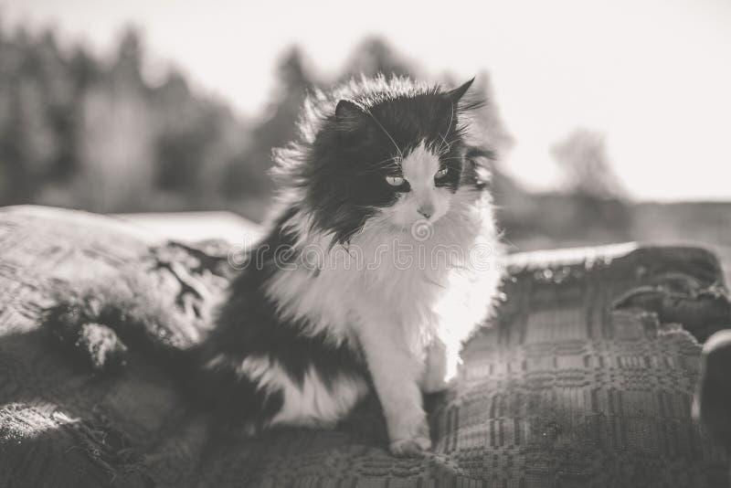 Ländliche Schwarzweiss-Katze lizenzfreie stockbilder